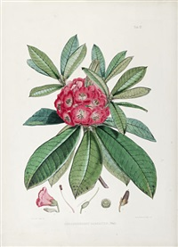 the rhododendrons of sikkim-himalaya (by w.h. fitch)(bk w/30 works & title, folio) by joseph (sir) dalton hooker
