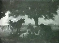 cattle resting. by j. ogden wood