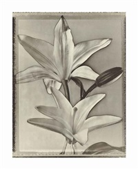 two lilies, 1996 by tom baril