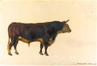 studies of different varieties of oxen common in the british isles (album w/42 works) by george garrard