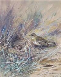 tree pipit by george edward lodge