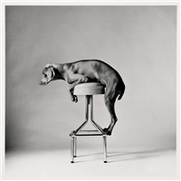 untitled by william wegman