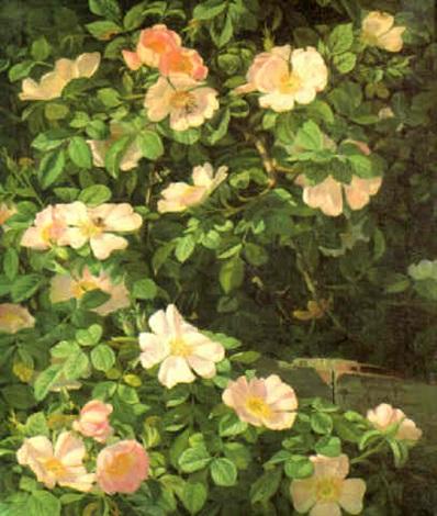 dog roses by niels peter rasmussen