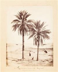 vue prise dans l'oasis d'el-hadjira by piboul (capitaine)