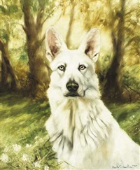 white german shepherd by mick cawston