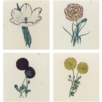 a tulip, a picotee and two varieties of ranunculus (4 works) by edwin dalton smith