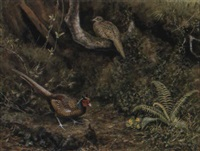 cock and hen pheasant in a woodland clearing by george morrison reid henry