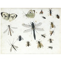 dragonflies, beetles, and other insects (study) by maria geertruida snabilie