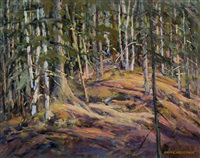 sunlight in the bush, gatineau park by bruce heggtveit