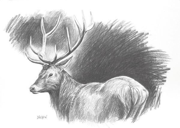 étude de cerf (study) by christophe drochon