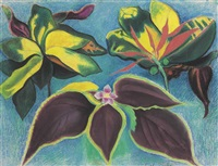 tropical plants by joseph stella