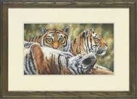 young tigers by lindsey selley