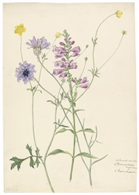 blaue rasselblume, türkischer drachenkopf, ranunkel (+ another, similar, smaller; 2 flower studies)) by josef knapp