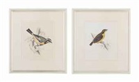 birds (18 works from illustration of british ornithology) by william home lizars