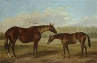cavallo e puledro by john thomas