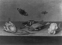a still life with dead songbirds, a rose, a tulip, butterflies and other insects on a ledge by willem (guilliam) de heer