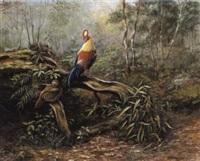 ceylon junglefowl by george morrison reid henry