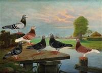 les pigeons by charles mertens