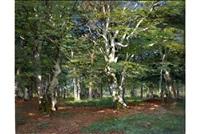 bosque soleado by aurelio tolosa alsina