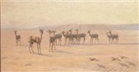 springbok and sand grouse by john charles dollman