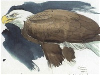 study of a bald eagle by martin glen loates