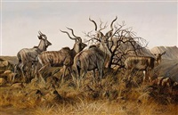 kudus in the brush by gary r. swanson