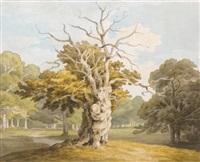 an oak at kedleston hall, derbyshire by john white abbott