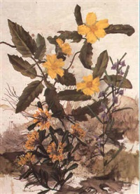 hibbertia by william ernest maurice fletcher
