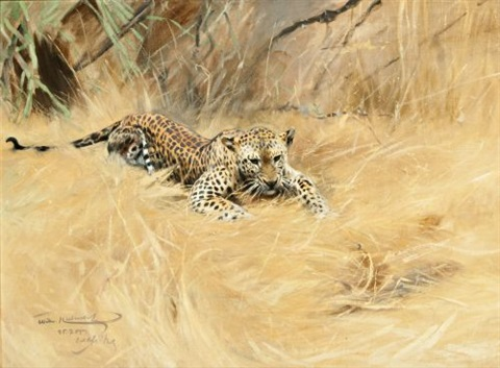 leopard by wilhelm friedrich kuhnert