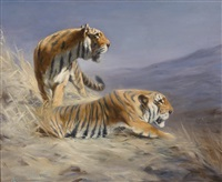 resting tigers by lilian cheviot