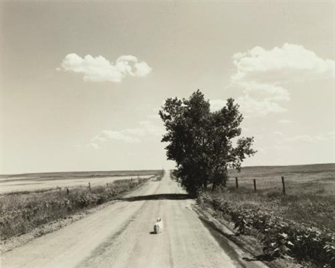sally the pawnee grassland colorado weld county by robert adams