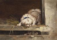 hund und katz by vincent de vos