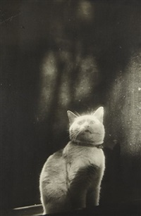 please open the door (cat in window) by shikanosuke yagaki