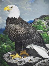 bald eagle by axel amuchastegui