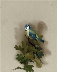 a blue tit perched on an oak tree branch by james fenwick lansdowne