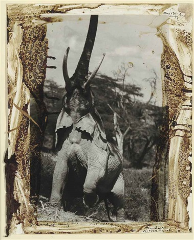 elephant reaching for the last branch kenya from the end of the game last word from paradise by peter beard