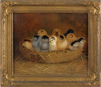 ten chicks in a basket by ben austrian