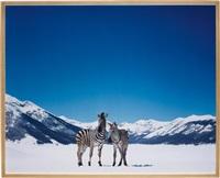 untitled (zebras) by paola pivi