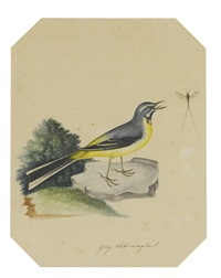 a grey water wagtail; a redstart (pair) by christopher (rev.) atkinson