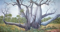 boab trees by colin atkins