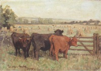 highland cattle by j. denovan adam jr.