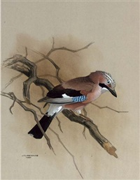 a jay on a branch by james fenwick lansdowne