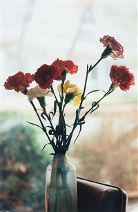 carnations by wolfgang tillmans