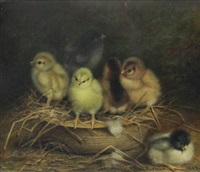 chicks in basket, 1904 by ben austrian