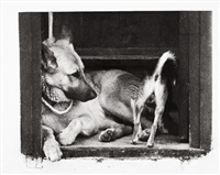 hunde by willy hengl
