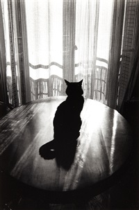 le chat by edouard boubat