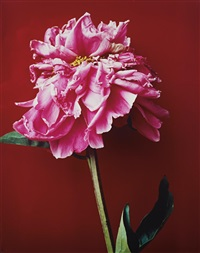 untitled (pink flower) from akt-tokyo, n.d by nobuyoshi araki