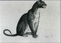 felis leopardus, afrika by robert kretschmer