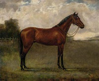 a bay horse in a paddock by adrienne lester