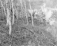 birch trees by william b. post